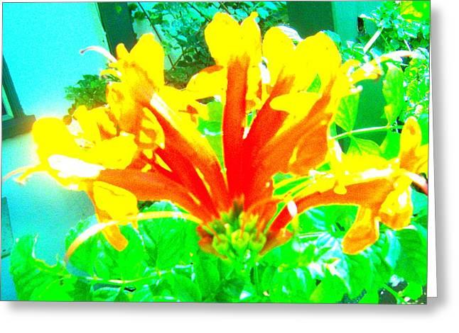 Floral Greeting Card by Dan Twyman