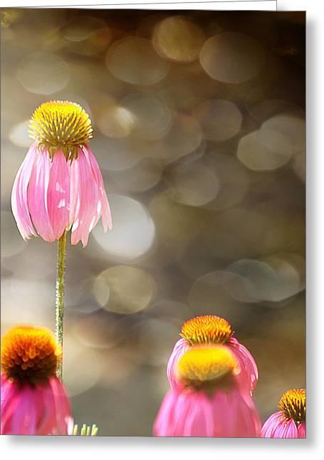 Floral Dance Greeting Card by Margaret Hormann Bfa