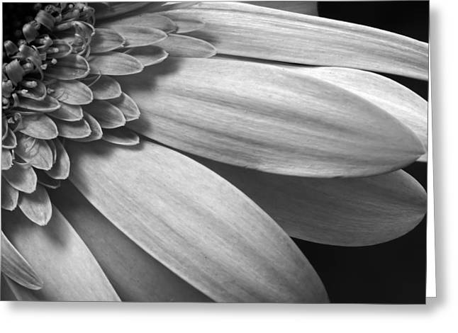 Greeting Card featuring the photograph Floral Detail by Dawn Currie