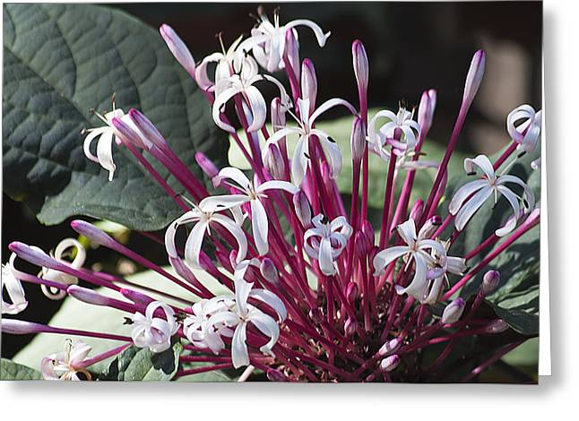 Floral Fireworks Greeting Card by Kenneth Albin