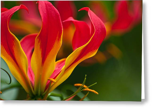 Floral Flames Greeting Card by Sabine Edrissi