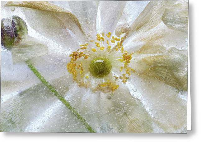 Floral Freeze Greeting Card