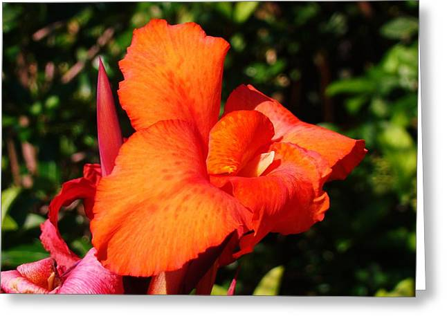 Floral Orange Greeting Card by Van Ness