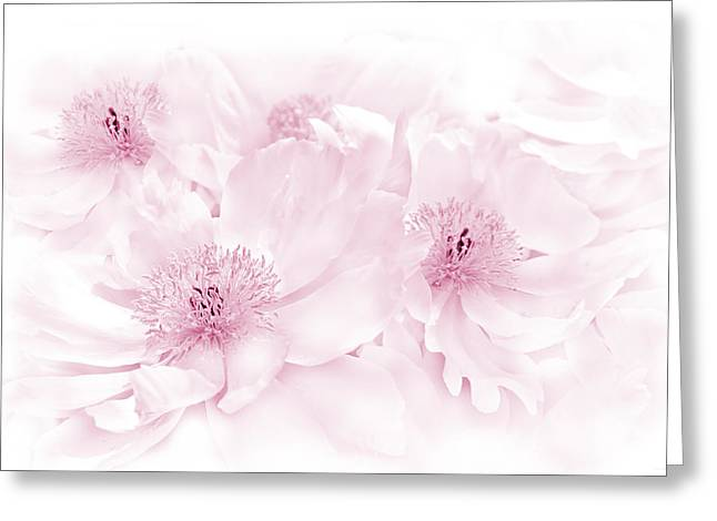 Floral Peonies In Pink Greeting Card by Jennie Marie Schell
