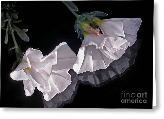Floral Reflections Greeting Card by Kaye Menner