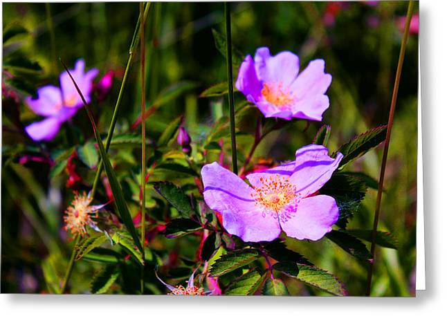 Floral Saturation Greeting Card by Sheryl Burns
