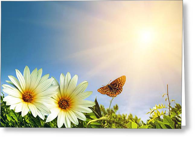 Floral Spring Greeting Card by Carlos Caetano