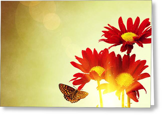 Floral Spring II Greeting Card by Carlos Caetano