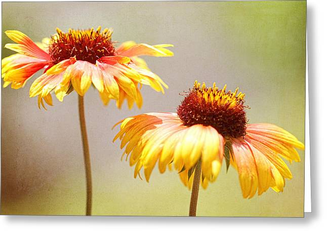 Floral Sunshine Greeting Card