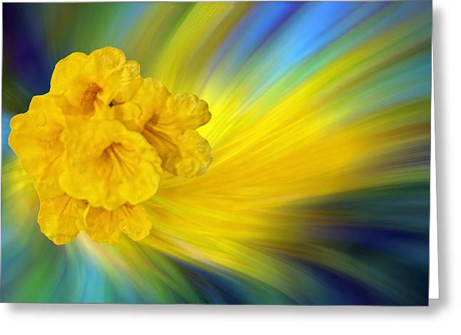 Floral Trumpets Abstract Greeting Card by Linda Phelps