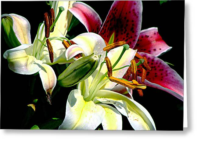 Greeting Card featuring the photograph Florals In Contrast by Ira Shander