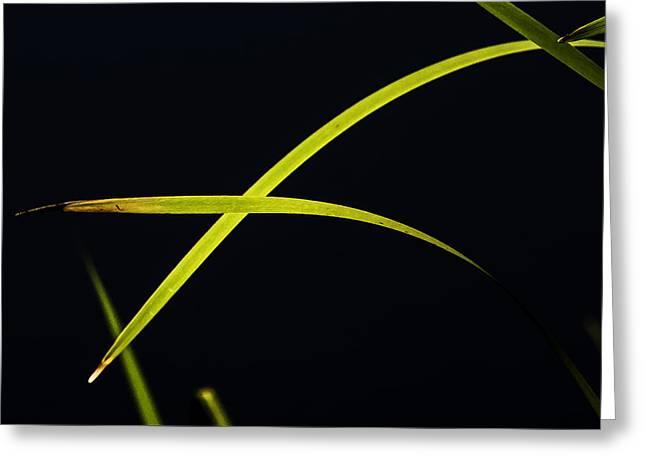 Florescent Blades Greeting Card