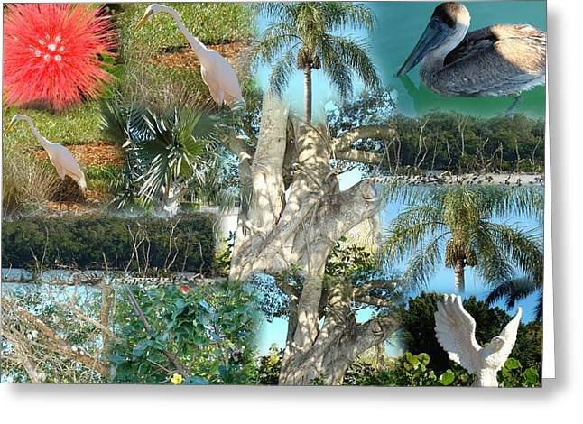 Florida Birds And Trees Greeting Card