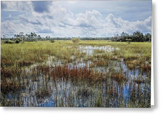 florida Everglades 0177 Greeting Card by Rudy Umans