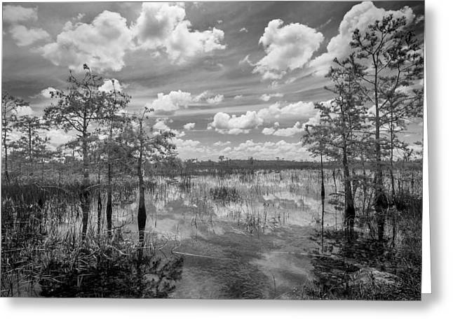 Florida Everglades 5210bw Greeting Card