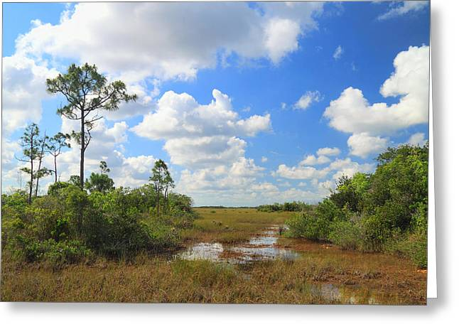 Florida Everglades Greeting Card by Rudy Umans