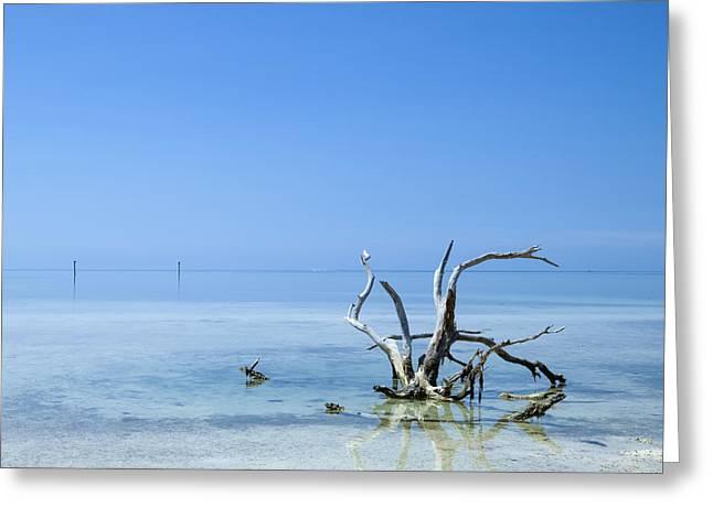 Florida Keys Lonely Root Greeting Card by Melanie Viola