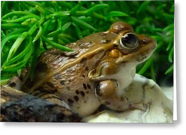Florida Leopard Frog Greeting Card