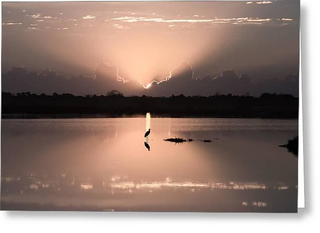 Florida Morning Photograph - A Blue Heron Sunrise- Version Two Greeting Card