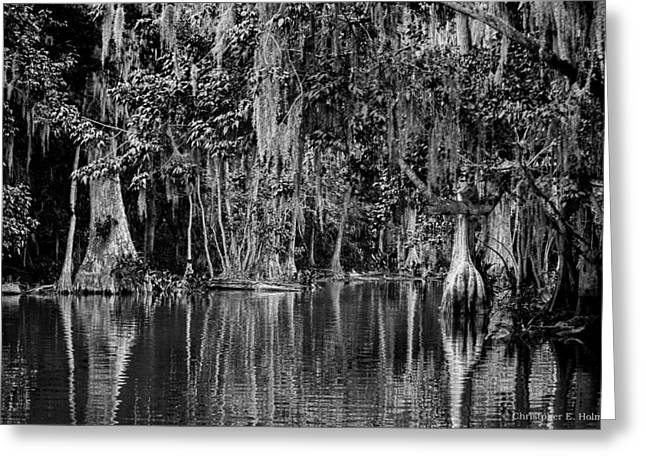Florida Naturally 2 - Bw Greeting Card