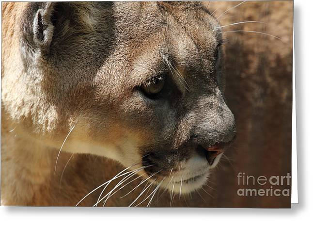 Greeting Card featuring the photograph Florida Panther by Meg Rousher