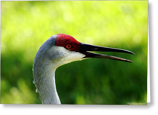 Florida Sandhill Crane Greeting Card