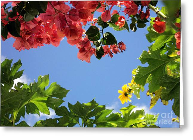 Greeting Card featuring the photograph Florida Sunshine2 by Megan Dirsa-DuBois