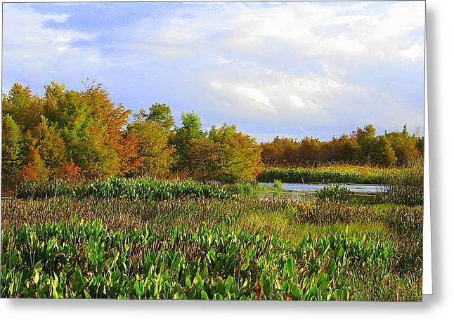 Florida Wetlands August Greeting Card
