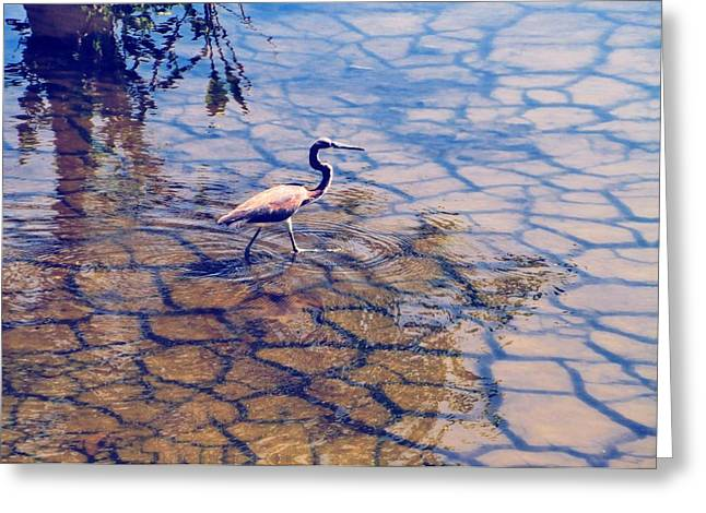 Florida Wetlands Wading Heron Greeting Card