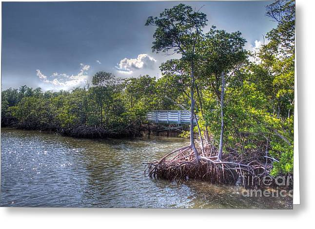 Florida's Dawn Greeting Card by Ines Bolasini