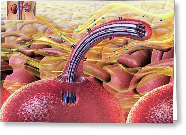 Flow Detection By Kidney Cells Greeting Card by Nicolle R. Fuller