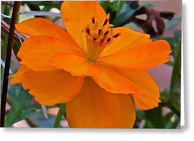 Flower 115 Greeting Card by Patsy Pratt