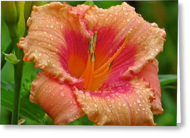 Flower 120 Greeting Card by Patsy Pratt