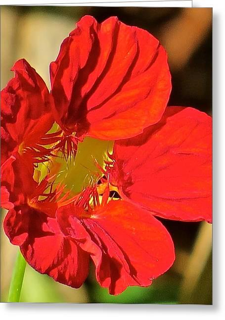 Flower 123 Greeting Card by Patsy Pratt
