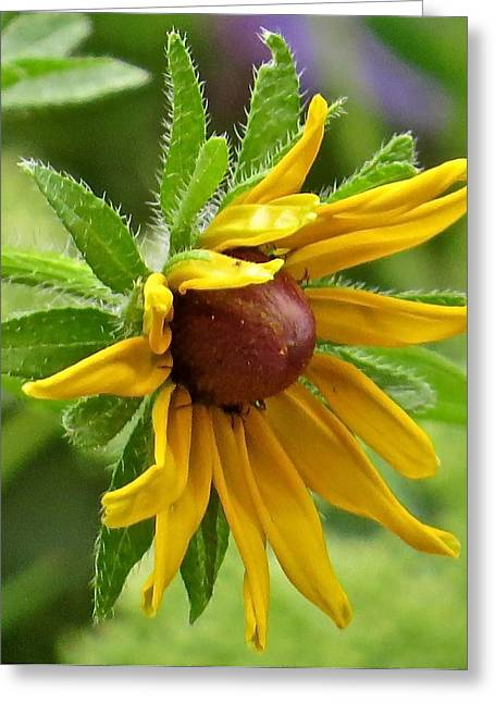 Flower 127 Greeting Card by Patsy Pratt