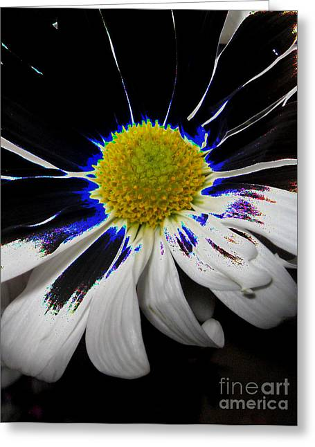 Art. White-black-yellow Flower 2c10  Greeting Card