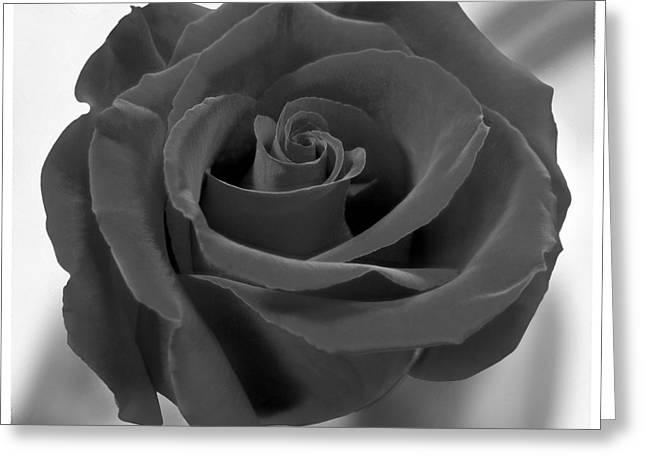 Dark Rose Greeting Card by Mike McGlothlen