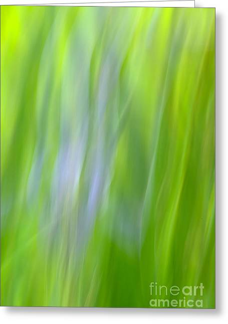 Flower Abstract Greeting Card by Kelly Morvant