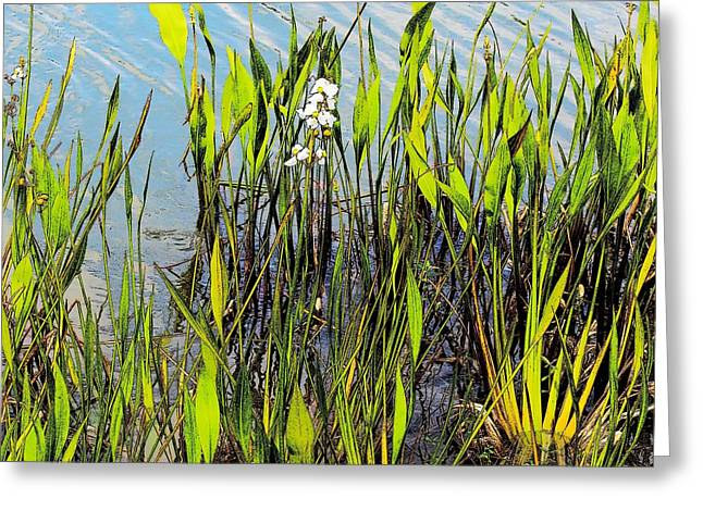 Flower And Pond Grass Greeting Card