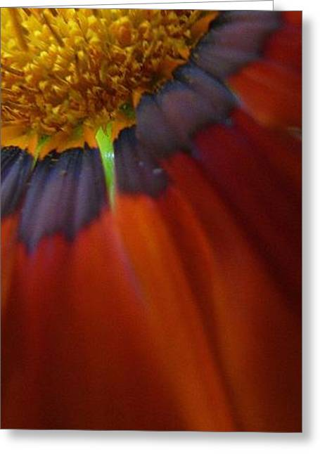 Greeting Card featuring the photograph Flower by Andy Prendy