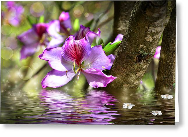 Flower Bauhinia And Simulation Of Water Greeting Card