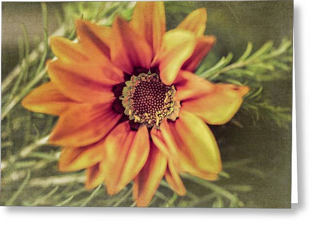 Flower Beauty I Greeting Card by Marco Oliveira