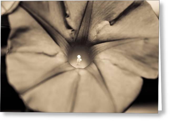 Flower Beauty Greeting Card