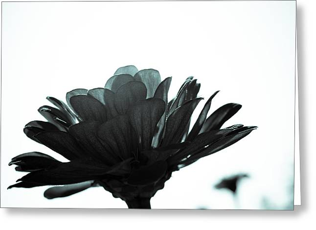 Flower Bloom Greeting Card by Paige Sims