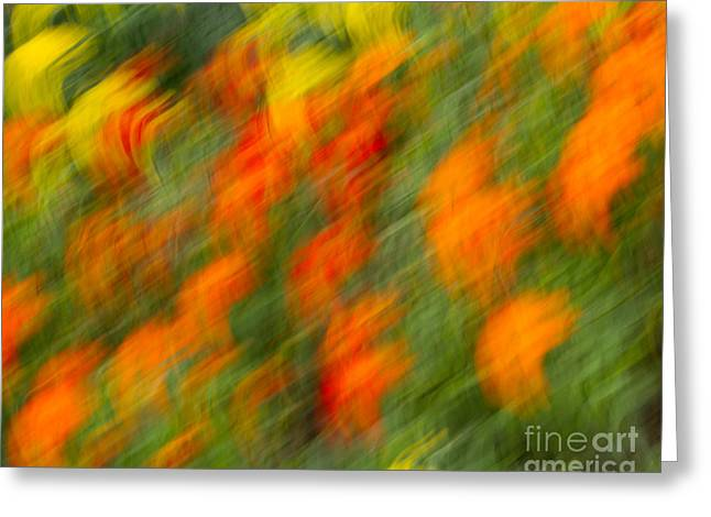 Greeting Card featuring the photograph Flower Blur by Dale Nelson