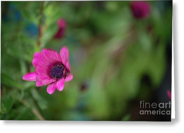 Flower Bokeh  Greeting Card by Jordan Rusin