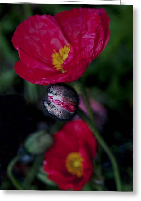 Greeting Card featuring the photograph Flower Bud by Haleh Mahbod