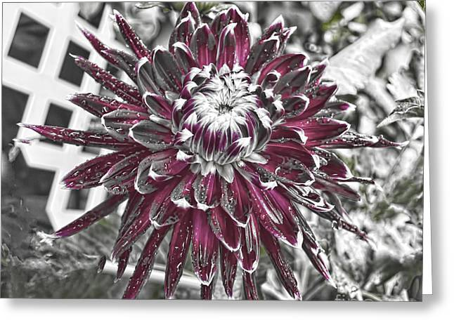 Flower - Dahlia At Dusk - Luther Fine Art Greeting Card by Luther Fine Art