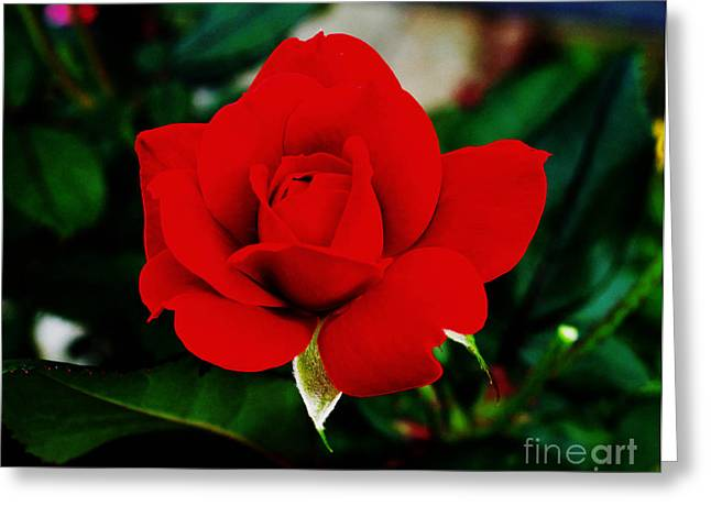 Flower  - Daring Red Rose - Luther Fine Art Greeting Card
