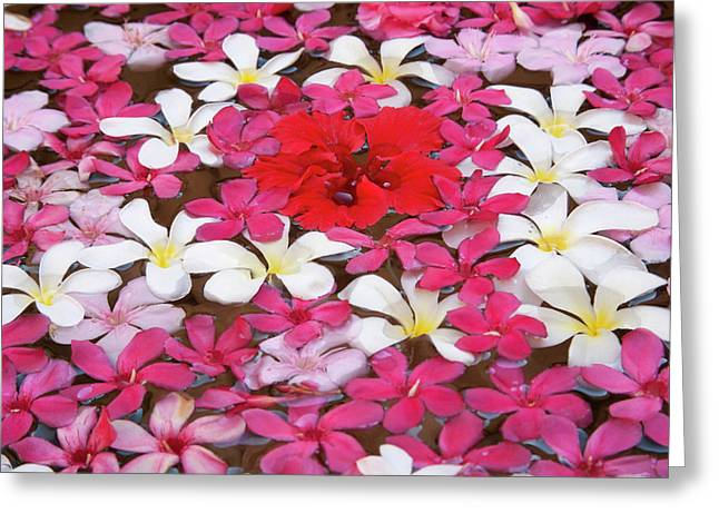 Flower Decoration, Udaipur, Rajasthan Greeting Card by Keren Su
